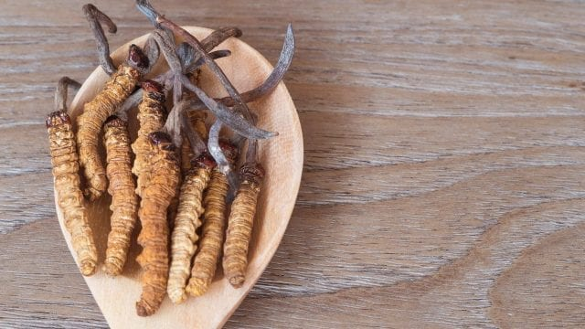 cordyceps, bulk mushrooms