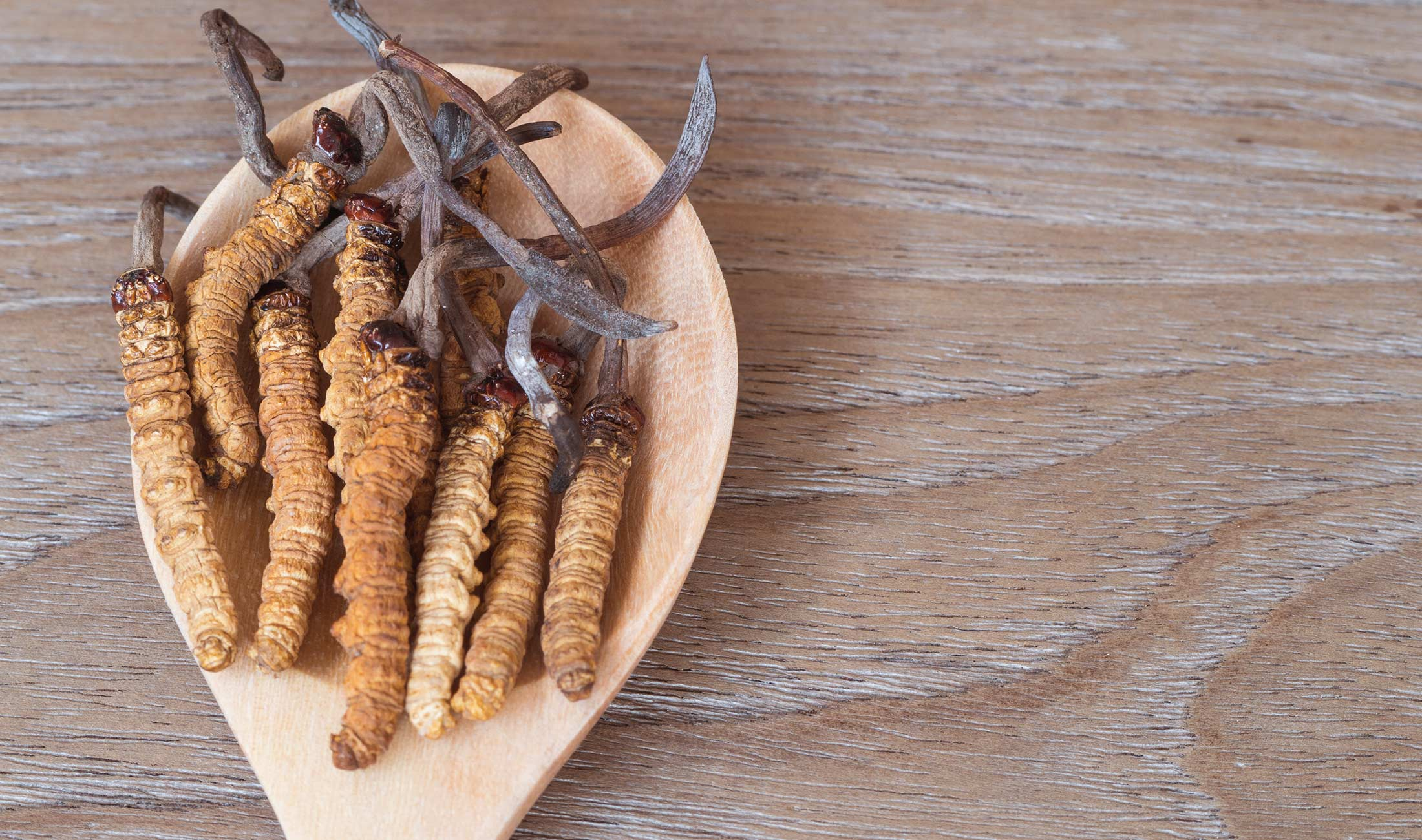 cordyceps, medicinal mushrooms, bulk mushrooms